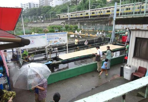20150729_Ichigaya fish center_rev04