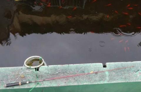 20150729_Ichigaya fish center_rev06