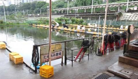 20150729_Ichigaya fish center_rev09