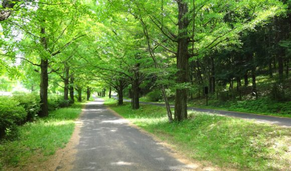 12_国営昭和記念公園のレンタサイクルを借りるには開園時間に並ぶ必要がある?