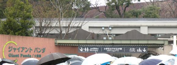 上野動物園・パンダを見るための列はパンダ舎の前で小学生がいる家族用とそれ以外に分かれる