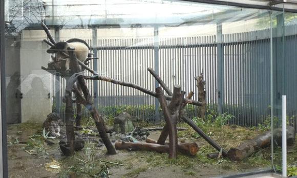 上野動物園・パンダのシャンシャンは木の上でお昼寝中
