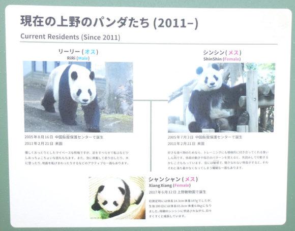 上野動物園・上野動物園で現在飼育されているパンダの紹介・リーリー、シンシン、シャンシャン