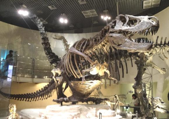 上野にある国立科学博物館の恐竜の化石の展示にあるティラノサウルス