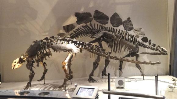 上野にある国立科学博物館の恐竜の化石の展示にあるステゴザウルス・ガーゴイレオサウルス