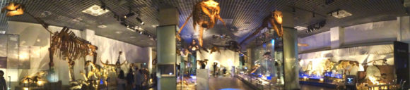 上野にある国立科学博物館の動物の化石標本コーナー・過去に生きていた動物たちの骨格標本