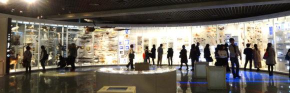上野にある国立科学博物館の微生物から植物、動物までの進化をまとめた系統樹